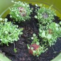 Go Green with Seed Ball Landscaping