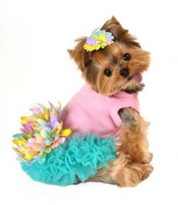 Dress Up Pet Hat Day
