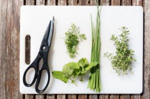 Herb Garden Planting Party