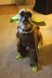 Adorable Pet Costume Contest
