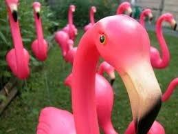 Camino Flamingo Treasure Hunt