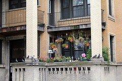balcony contest